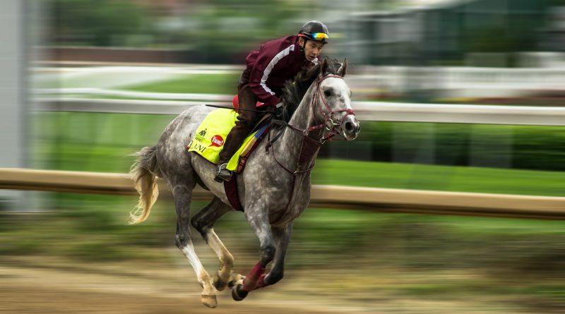 Horse Racing – AHS RocketLaunch