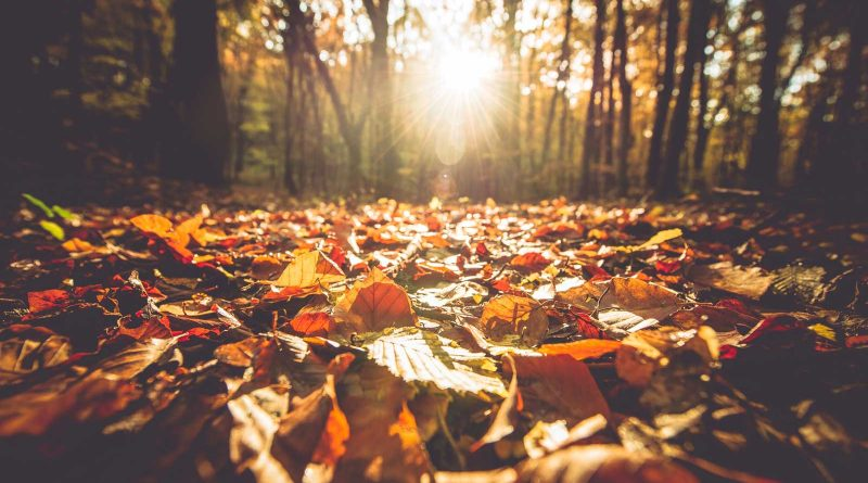 Falling Into Fun: Fall events for you, your friends, and your family
