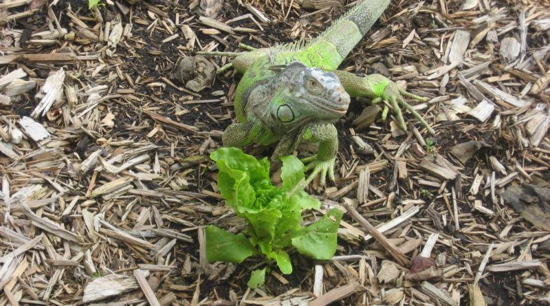 Our Reptilian Friend