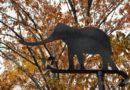 Walking the Elephant Trails – The Ethics of Elephants in Captivity